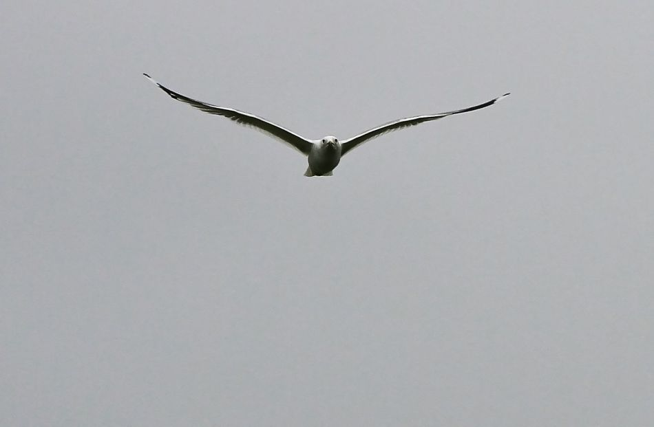 På vingene