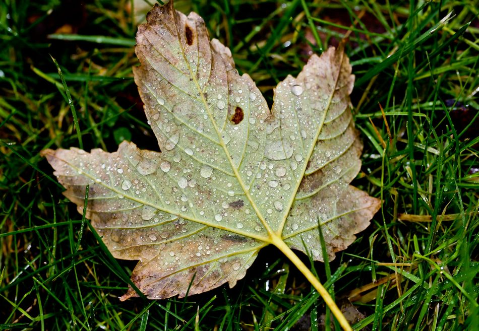 b_950_950_0_00_images_Dagensbilde_2013_Oktober_IMG_1874.jpg