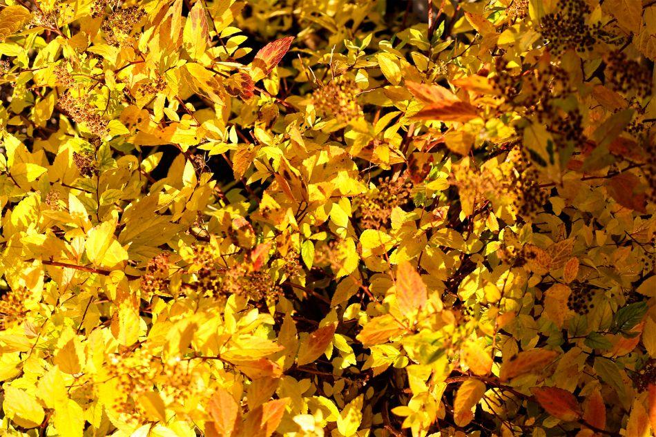 b_950_950_0_00_images_Dagensbilde_2014_Oktober_IMG_2951.JPG