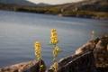 Flora ved Øvre Breivatn